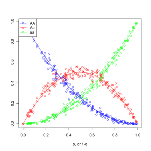 Using simulation to demonstrate theory: Hardy-Weinberg Equilibrium